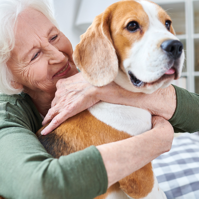 Boomer & Senior - pets